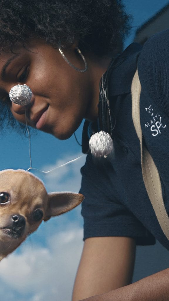 chihuahua photo bomb maryland spca afro pretty girl picture