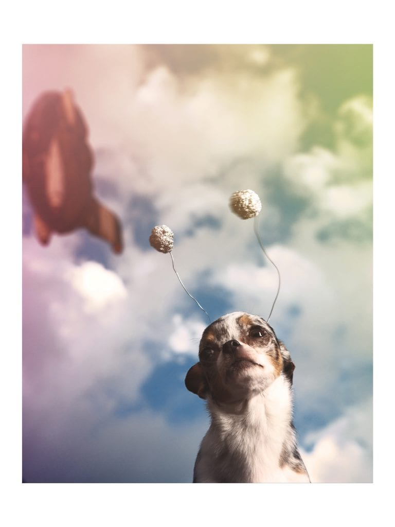 space chihuahuas dog cosplay long neck rocket to venus