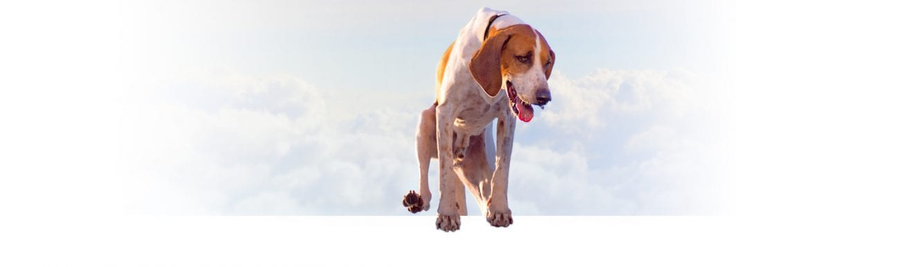 a photo of a foxhound hoping out of the screen wiht happy clouds behind him baltimore