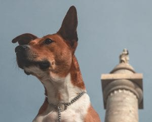 mutt infront of bluesky and washington monument