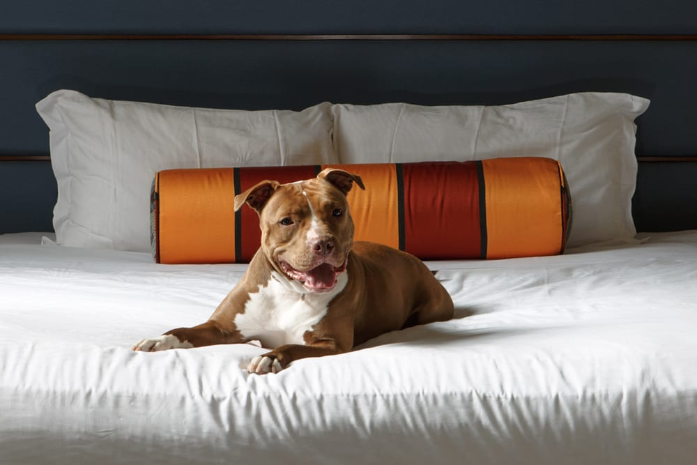 kimpton hotels dog photography