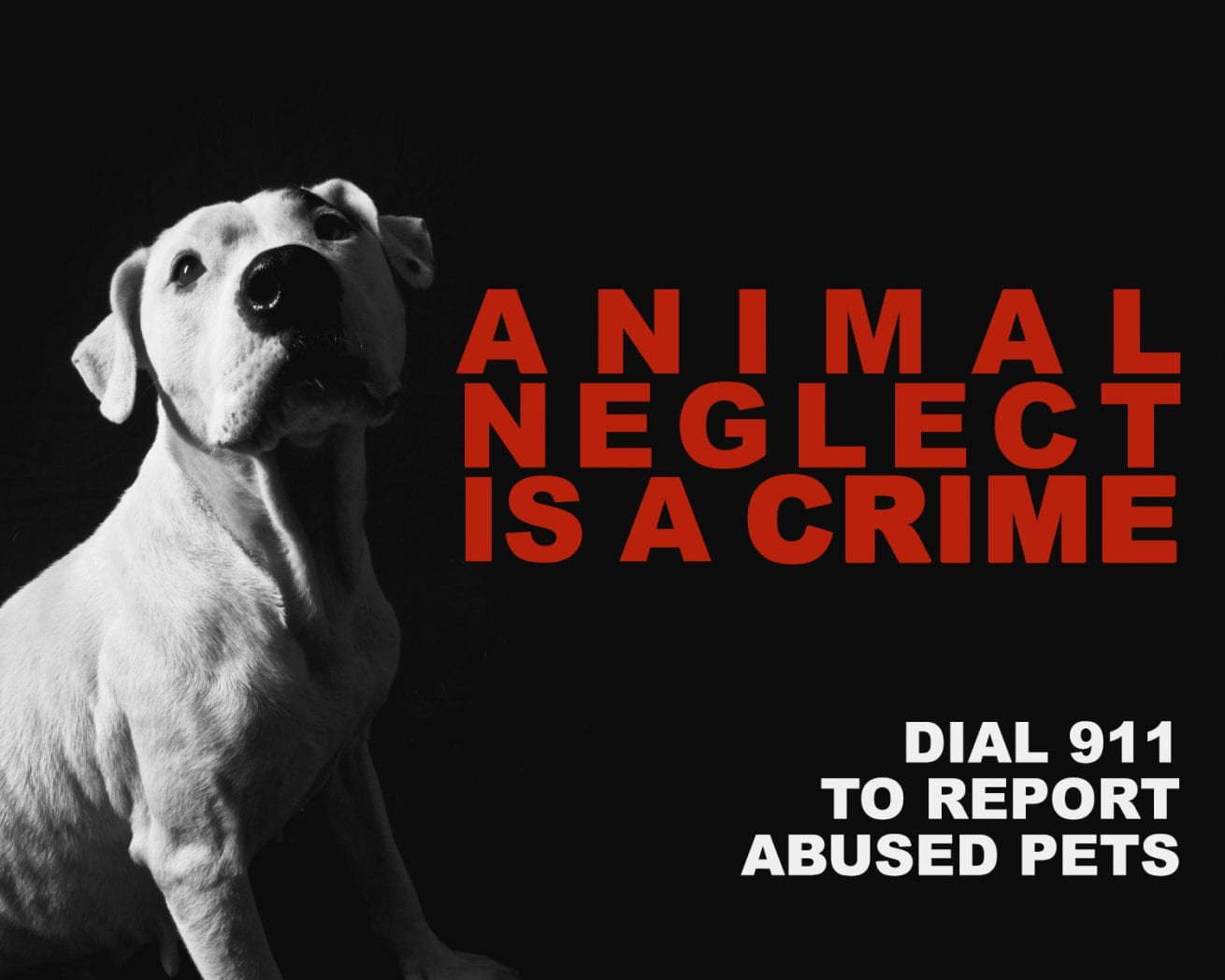 Is it a crime to abuse an animal