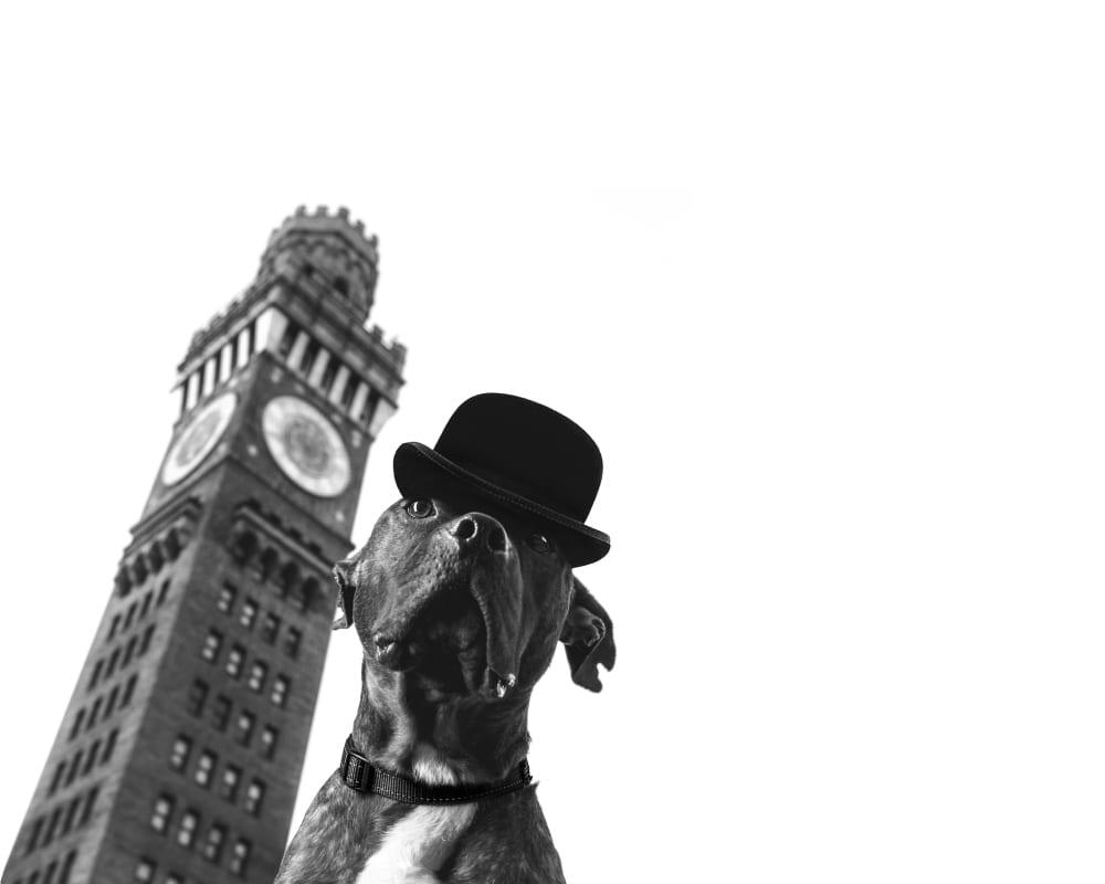 Pitbull in bowler cap at Bromo Seltzer tower