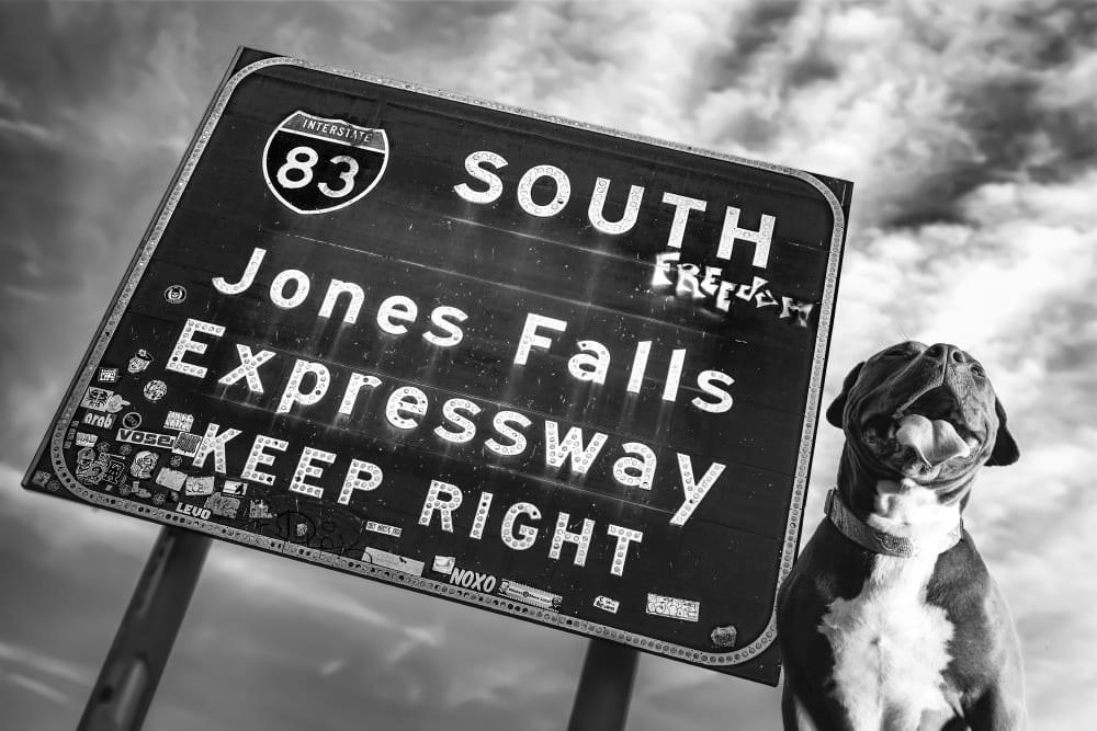 Staffy with 83 south roadside in hampden