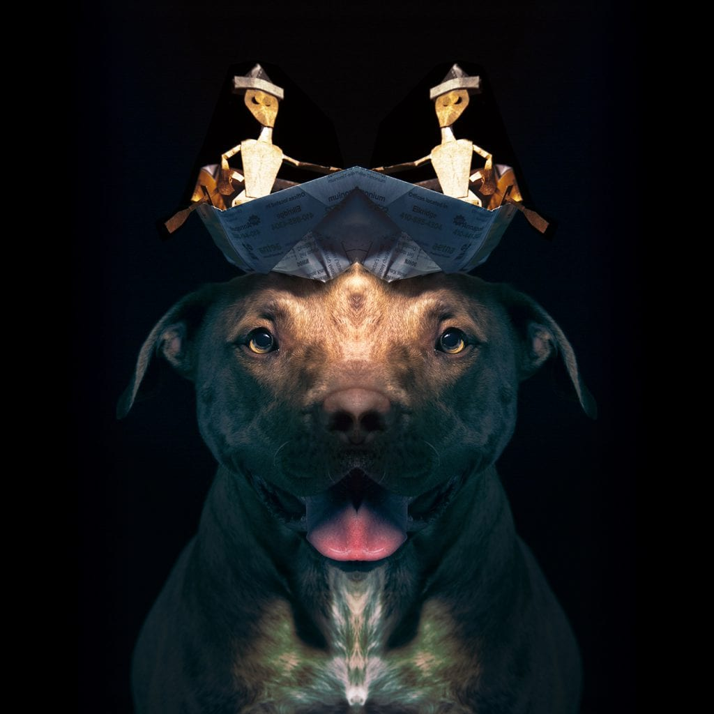 Pitbull Portrait of the Admiral from Paper Hats