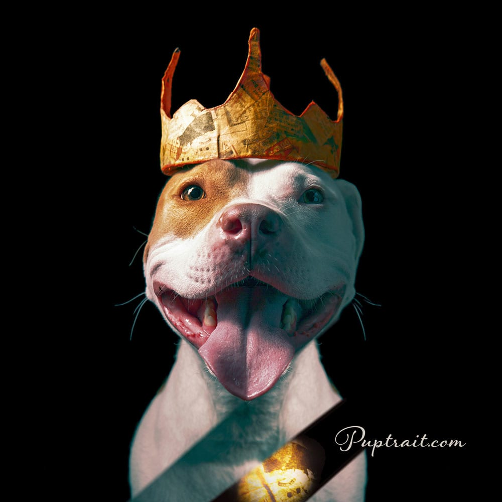 dog photo of a happy pitbull wearing a paper crown