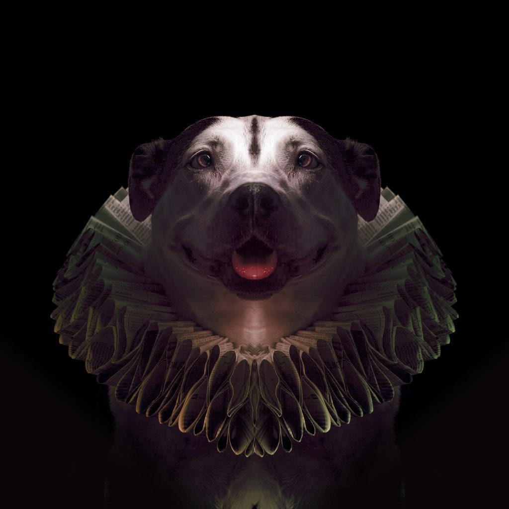 Pitbull Portrait of the Queen from Paper Hats