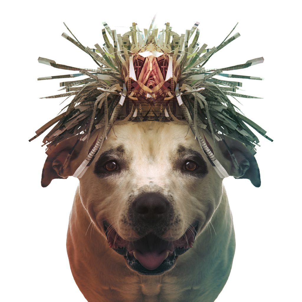 Pitbull Portrait of the Shaman from Paper Hats