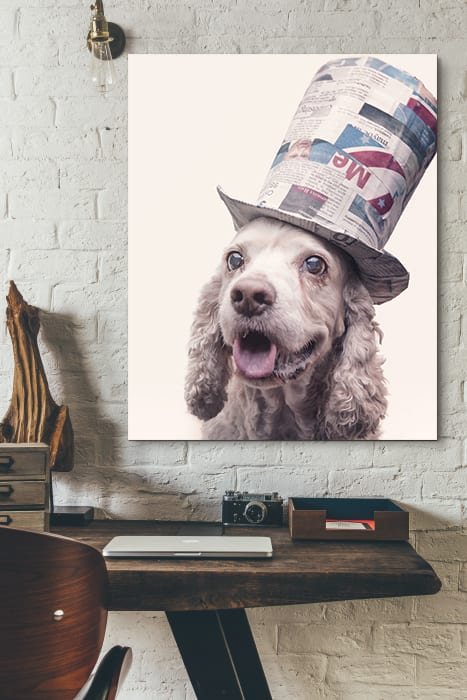 a portrait of a cocker spaniel dog wearing a red white and blue top hat captured at the puptrait studio in baltimore