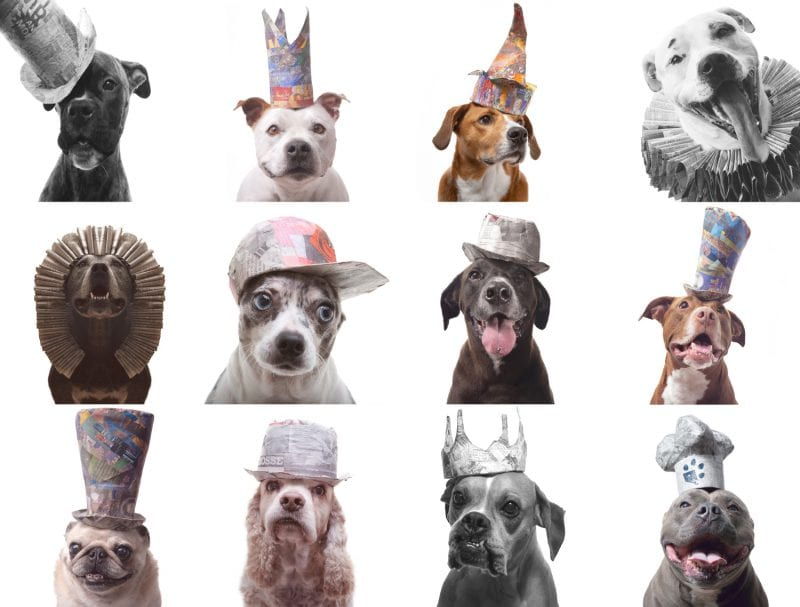collection of dogs wearing handmade paper hats original custom designed dog costumes and props
