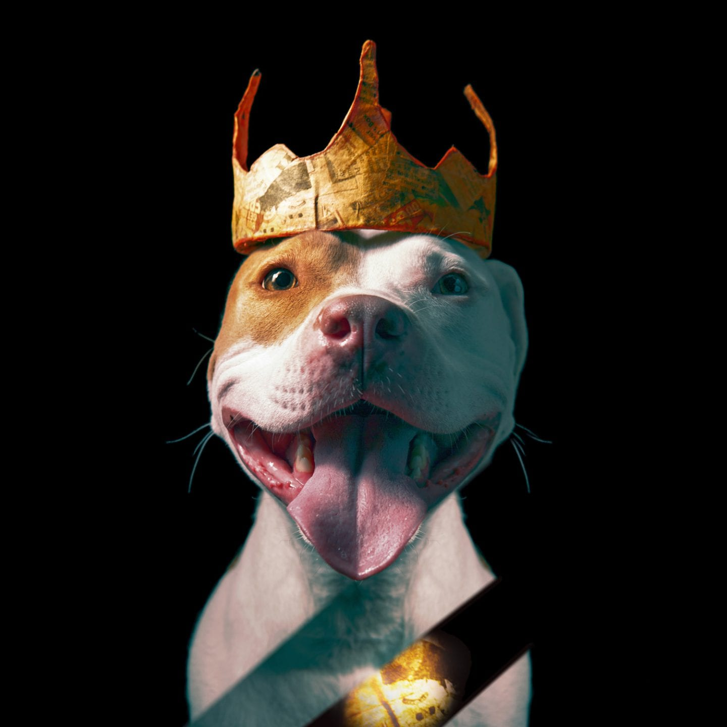 smiling pitbull wearing a crown