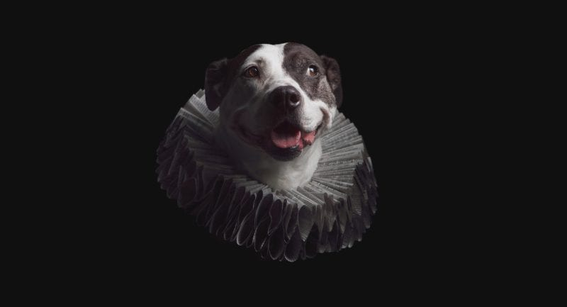 Fine art portrait of a pitbull pupper wearing an Elizabethan style ruff collar made of old newspaper