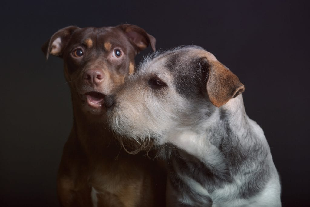 Pet photography studios that allow multiple dogs