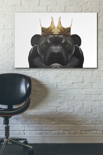 Fine art dog portrait mounted on dibond ready to hang in home or office.