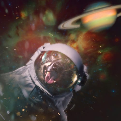 Dog photo example of a composite portrait made in Photoshop featuring a smiling dog wearing a space suit and floating in orbit around Saturn. Captured at Baltimore's own the Pup[trait Studio in Hampden - a dog friendly photo studio.
