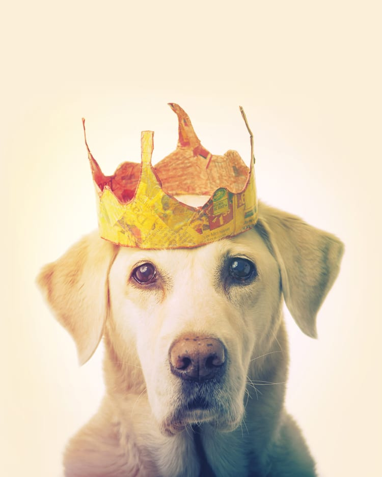 A golden retriever wearing a gold crown made out of newspaper