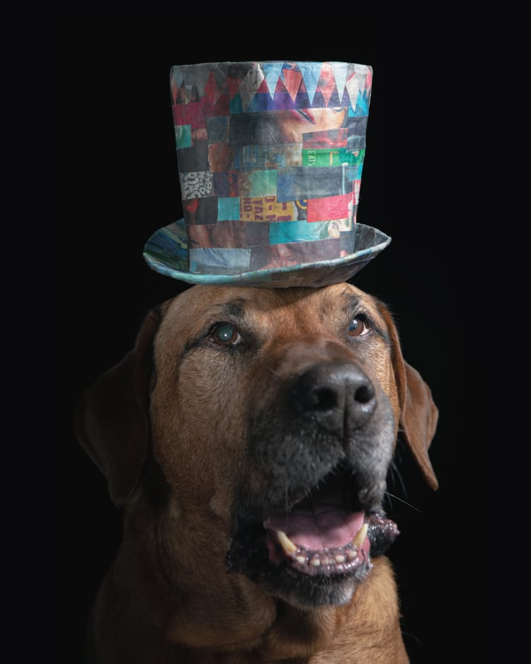 Shadowy photo of a large brown mastiff wearing a colorful tophat.
