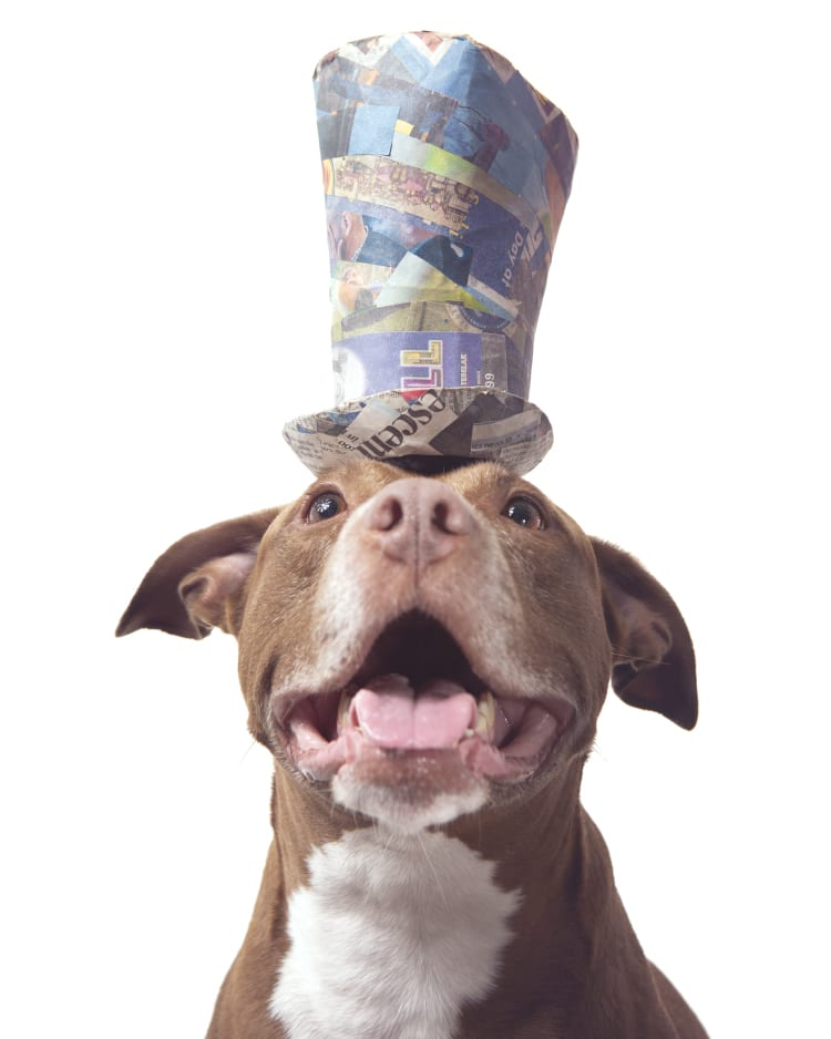 Photo of a smiling pitbull wearing a tophat.