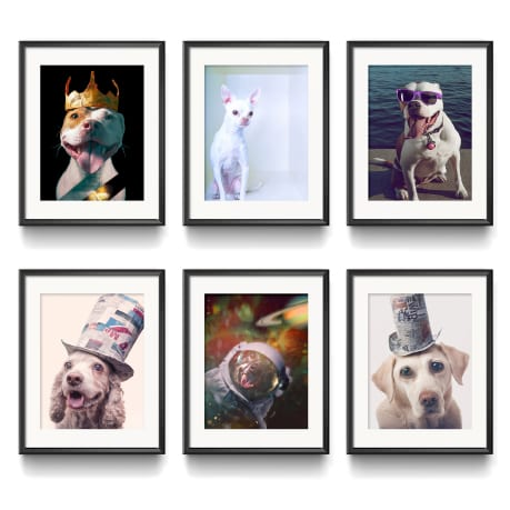 Dog wall art gallery hanging in matted frames