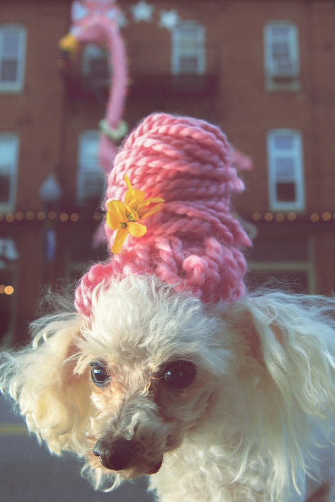 A photo of a cute toy poodle wearing a pink beehive wig made from yarn. Behind the dog is the iconic Pink Flamingo on the outside of Hon Bar in Hampden, home of the annual Hon Fest.