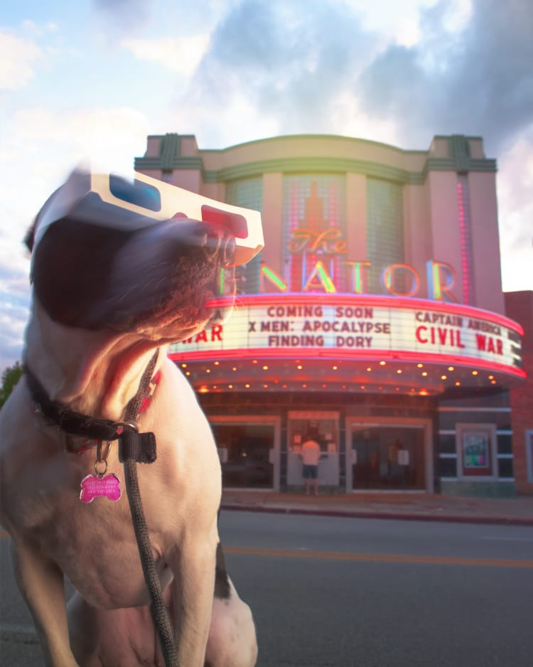 A photo of a bully puppy dog wearing old school 3d paper glasses in front of the historic Senator Theater in northern Baltimore on York Road.
