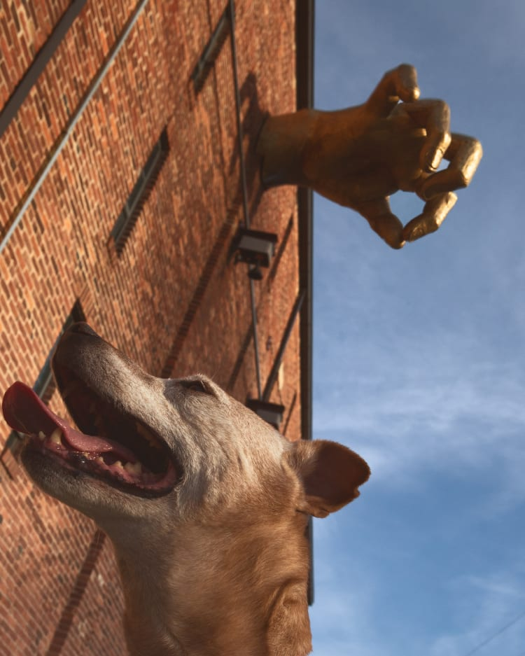 Photo of a sugar faced senior pitbull next to the Golden Hand attached to the outside of the American Visionary Arts Museum on Key Highway in Federal Hill, Baltimore, Maryland.
