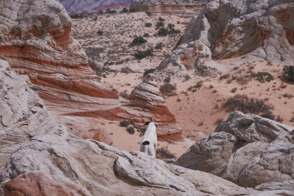 Photo of a cute dog over looking Arizona desert in the Vermilion Cliffs National Park.