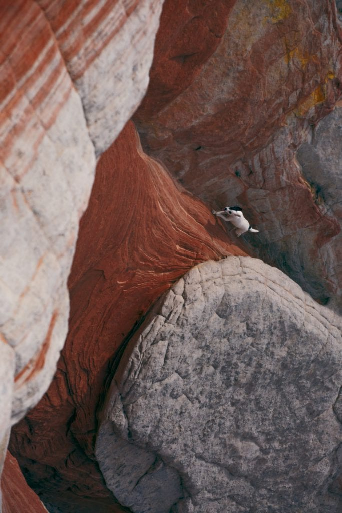 A rescued res dog running up the Worm located next to White Pocket in the Vermilion Cliffs National Park in Arizona.