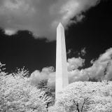 Infrared view of the Washington Monument, Washington, D.C.
