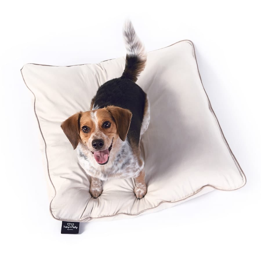 Commercial pet product photo of a dog on a bed from Keetsa mattress.