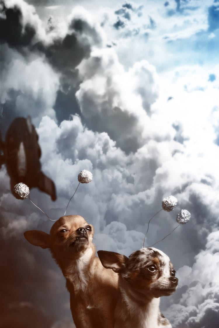 Commercial pet photography royalty free stock image featuring space Chihuahas infront of a smoking rocket cloud plume.