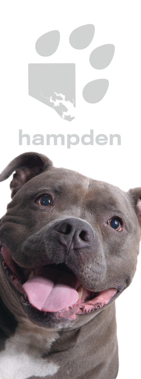 Photo of banner from Dog Avenue on 36th Street in Hampden featuring Sakai from Blue Pit BBQ and Whiskey Bar.