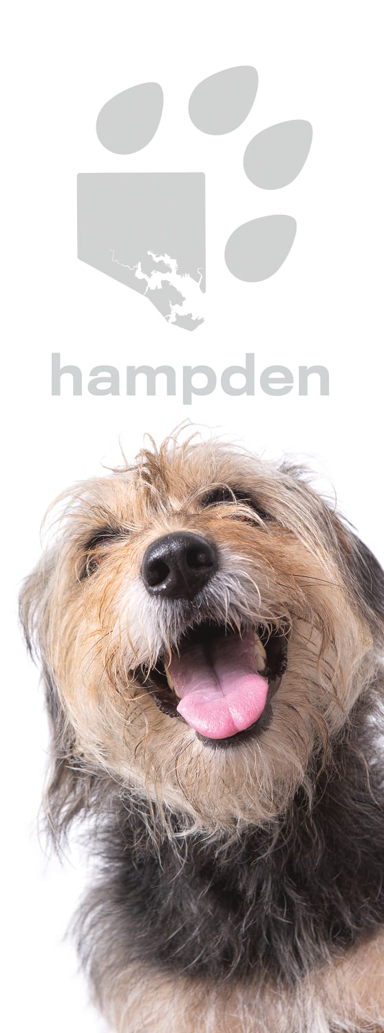 Photo of banner from Dog Avenue on 36th Street in Hampden featuring Archie from Doubledutch Boutique.
