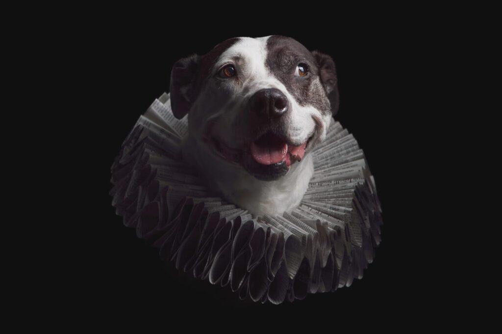 Dog photography portrait captured with a studio lighting setup.
