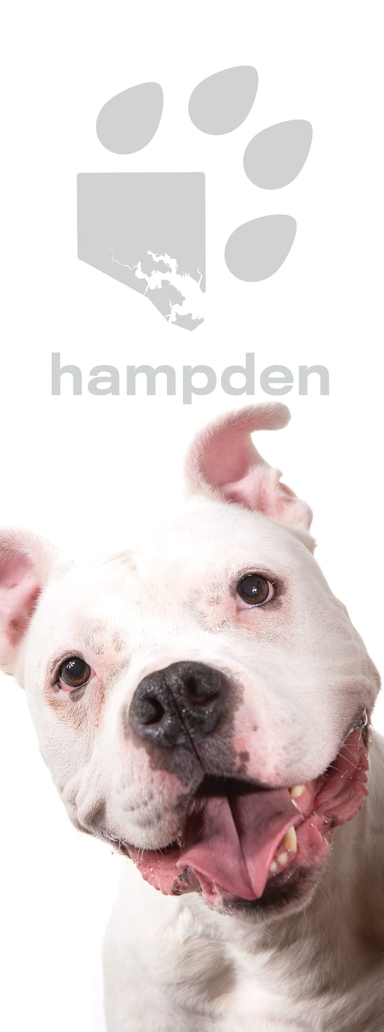 Photo of banner from Dog Avenue on 36th Street in Hampden featuring Knox the MD SPCA Puppy Partner.