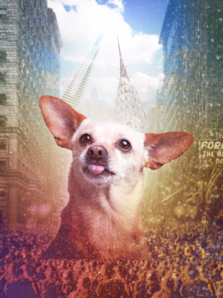 Surreal custom made pet portrait from a photo featuring a giant Chihuahua peeking out from a crowded cityscape.