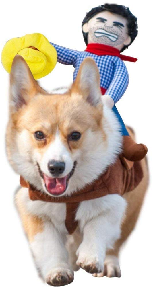 Photo of a Corgi wearing a riding cowboy costume.