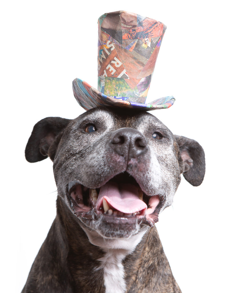 Photo of a senior Boxer mix pup wearing a colorful top hat made from upcycled scraps of newspaper.