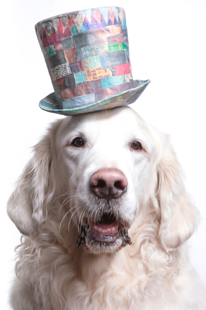Custom pet portrait of a senior English Golden Retriever wearing a colorful top hat made from upcycled triangle shape scrapes of newsprint, painstakingly organized into an intricate geometrical pattern. Photographed at the Puptrait Studio in Baltimore, Maryland.