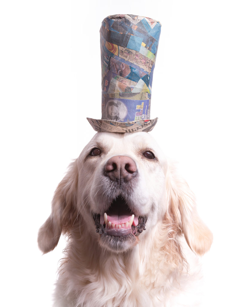 Fancy pet portrait of an English Golden Retriever wearing a comically tall blue and green striped top hat made from upcycled paper materials. Photographed at the dog friend Puptrait Studio in Baltimore, Maryland.