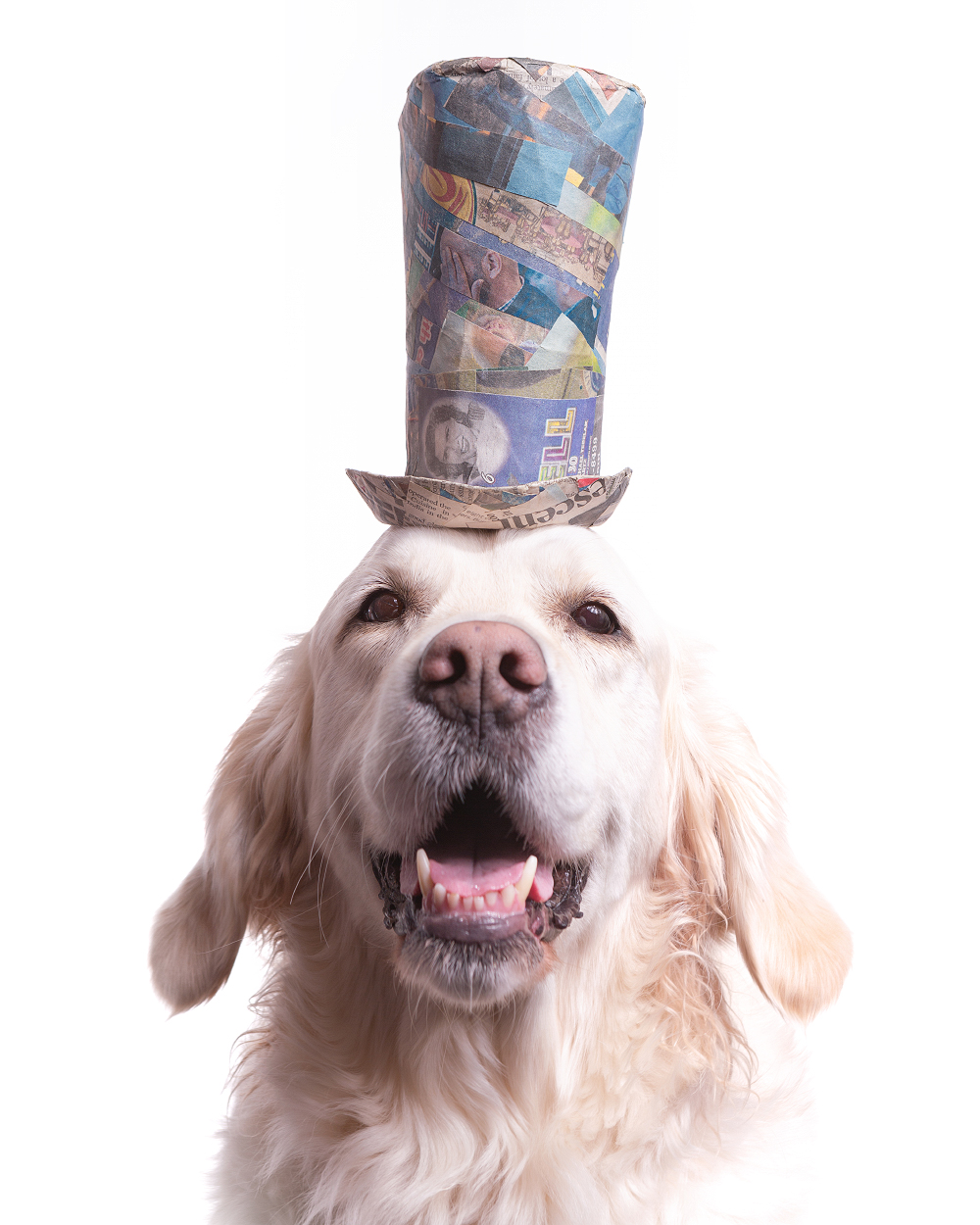 Pet portrait of a smiling Golden Retriever wearing a colorful top hat, photographed at the Puptrait Studio by professional pet photographer, J.B. Shepard. The Puptrait Studio is a dog friendly photography studio located in Baltimore, Maryland -- just minutes from Washington D.C. and Northern Virginia.